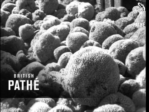 Underwater Harvest (1935)