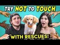 Try Not To Touch Challenge ft Rescue Animals Best Friends