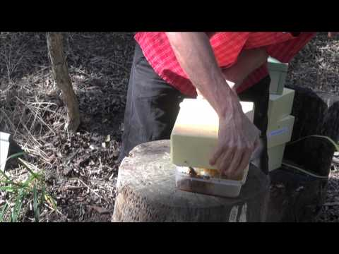 Part 4: Extracting Honey from an Australian Native Beehive