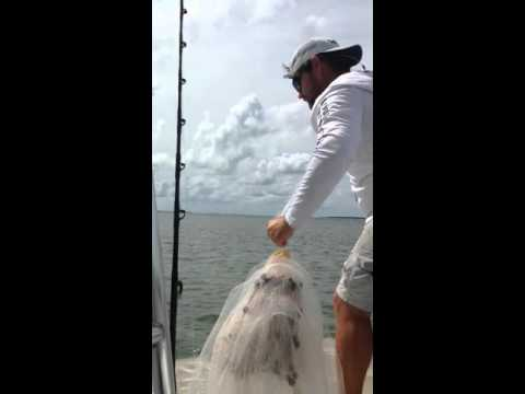 Captain Marcus Williams catching live bait in the Florida Keys