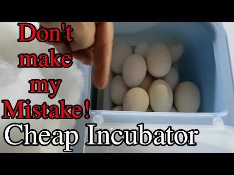 Cheap Small Incubator Don't Make a Big Mistake Duck Eggs