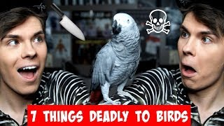 7 Things In Your Home That Can Kill Your Bird! (MUST WATCH)