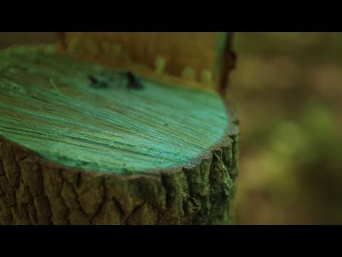 Timber Stand Improvement (TSI) - The Management Advantage