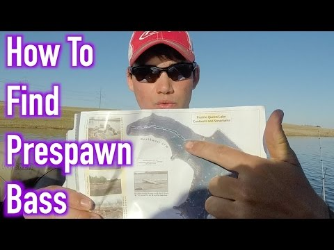 How To Find Prespawn Bass