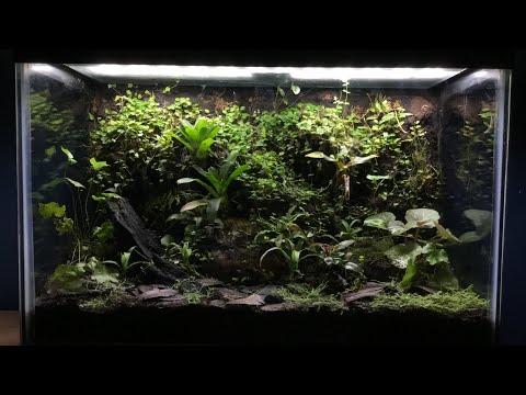 An Update On The Jungle Vivarium