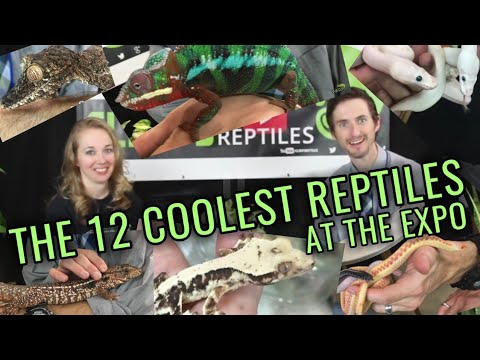 The 12 Coolest Reptiles at the Wasatch Reptile Expo