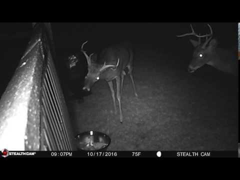 Bucks decide to take a break