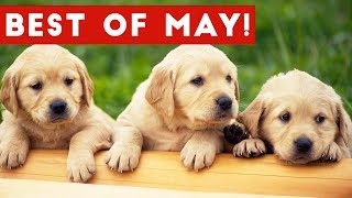 Funniest Pet Reactions & Bloopers of May 2017 | Funny Pet Videos