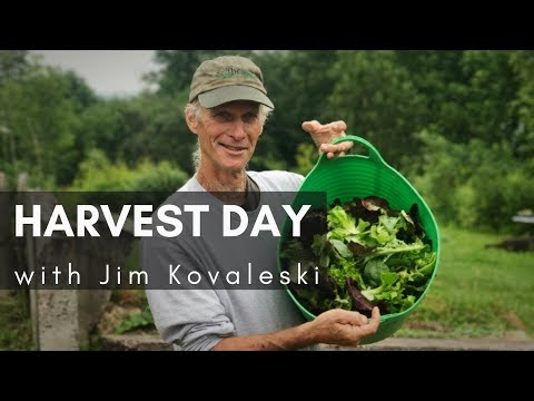 From FARM TO TABLE: Harvest Day & EAT LOCAL (Jim Kovaleski)