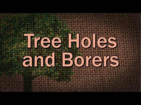 Tree Holes and Borers - Family Plot