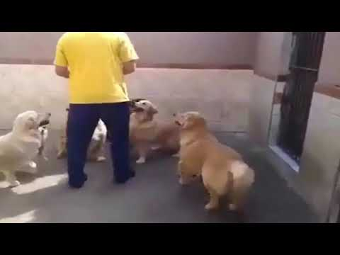 Top 5 discipline dogs....