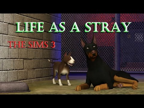 Life As A Stray - EP01 - I'M A DOG!