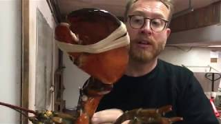 50 Yr Old LOBSTER The BIGGEST LOBSTER YOU