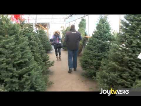 JoytvNews - Real or Fake Christmas Tree