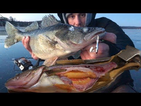 Walleye Ice Fishing Catch n Cook Fried Roe