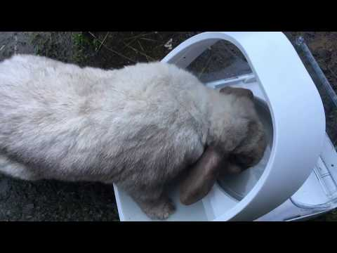 Review - Surefeed Microchip Pet Feeder for our Rabbits