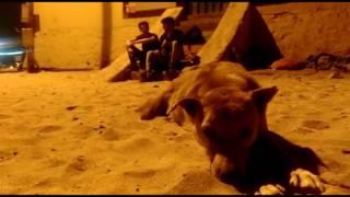 Yaaron Dosti Badi Hi Haseen Hai Yaaron  True Friendship song  mp3