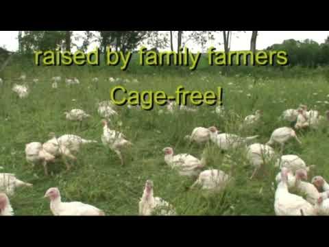 Free Range Turkey: Buy Free Range Turkey, Organic, Pastured, & Fed Cocofeed