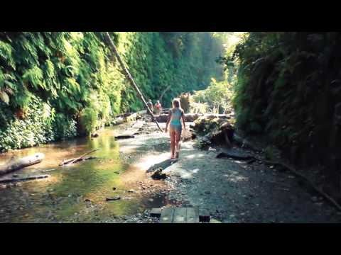Redwood National Park: Fern Canyon