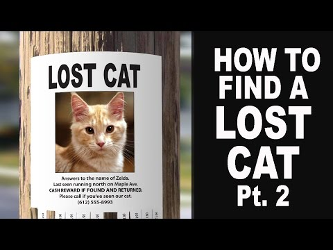How To Find A Lost Cat Pt. 2