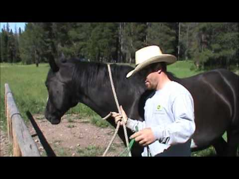 Putting a rope halter on a horse.