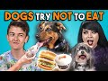 Download  Dogs Try Not To Eat Challenge (React) MP3,3GP,MP4