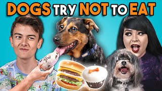 Download Dogs Try Not To Eat Challenge (React) Video