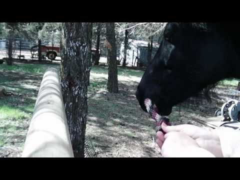 How to use a catch rope on a horse