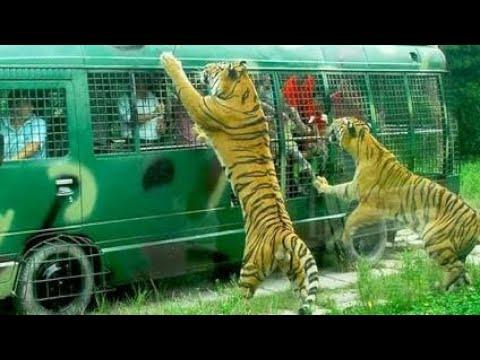 Safari Park -Top1 Travel Spot In Bangladesh