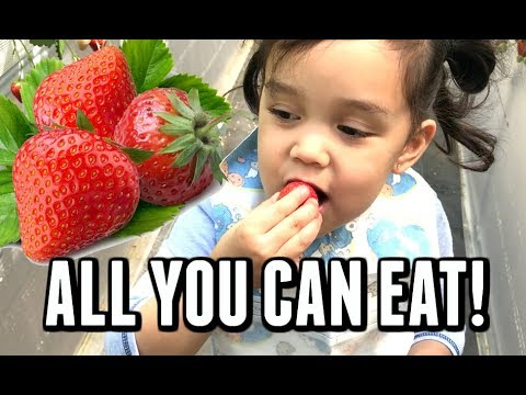ALL YOU CAN EAT STRAWBERRIES IN YOKOSUKA! -  ItsJudysLife Vlogs