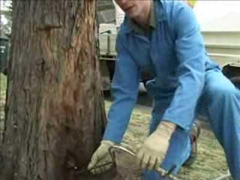 Tree termite nest control