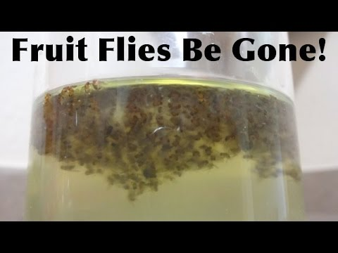 Get Rid Of Your Fruit Flies - Fast And Simple