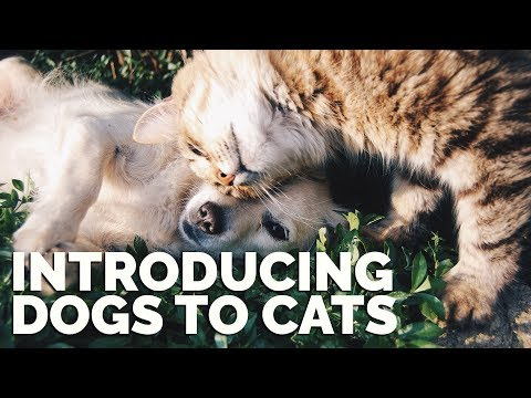 Introducing Dogs to Cats