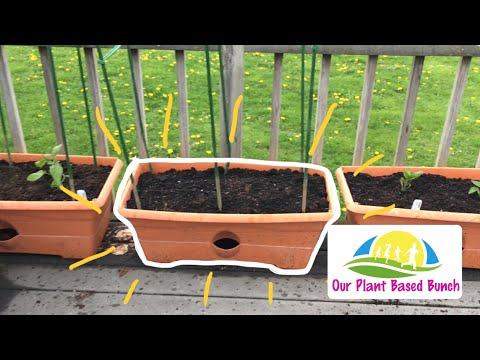 Grow Box Gardening And Vegan Lasagna (Vlog May 9, 2018)