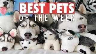 Best Pets of the Week | June 2018 Week 1