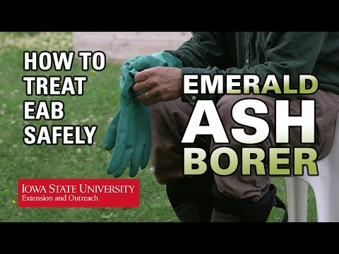 How to Treat EAB Safely