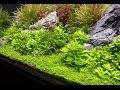 Planted tank - Tank Balance & nutrient dosing