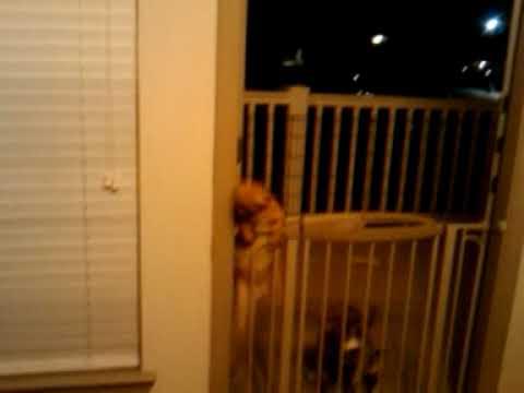 Chloe Jumping Over Gate