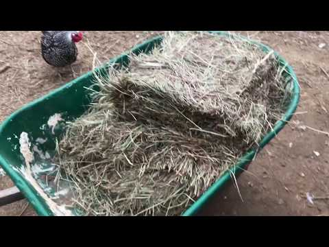 Rooster Problem Solved! cleaning the barn