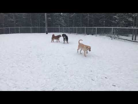 Toby and hero mount pearl dog park January 2018