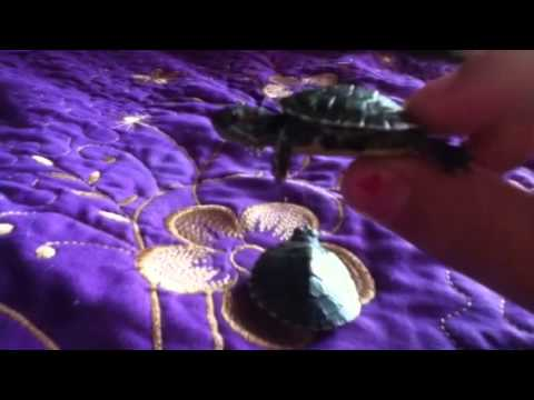 how to know if a baby turtle is male or female