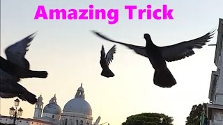 Amazing Doves Trick! Trick works on almost all birds! Awesome Birds Experiment!    WasabySajado