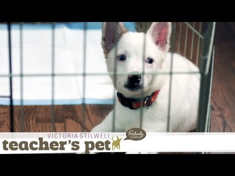 Teach Your Puppy to Go to Bed on Cue | Teacher's Pet With Victoria Stilwell