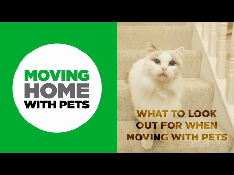 How to reduce stress for your pets when moving house