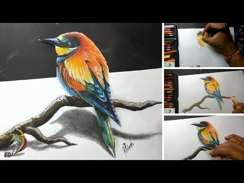 Realistic Drawing Of Rainbow Bird ( Time Lapse ) - 3D Art 4 You