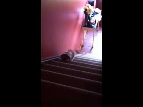 Rabbit runs up Stairs