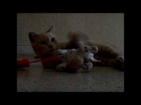 REVENGE! Kitten vs. Dog Toy - Vlog #2 - Feb.17.2010