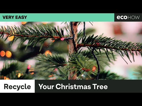 5 things to do with an old christmas tree