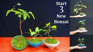 How to Start Bonsai | Starting Three New Bonsai Trees | Bonsai care for Beginners // GREEN PLANTS