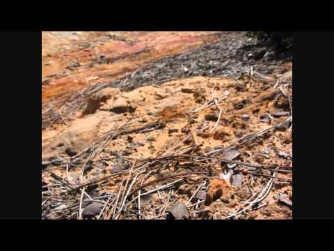 Finding Queen Ants